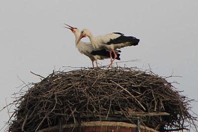 wachsen eier während des brütens